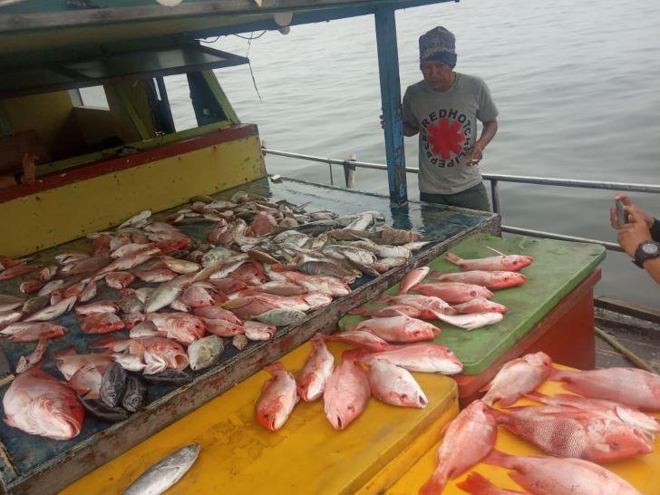 Hasil Tangkapan Ikan Laut Pontianak