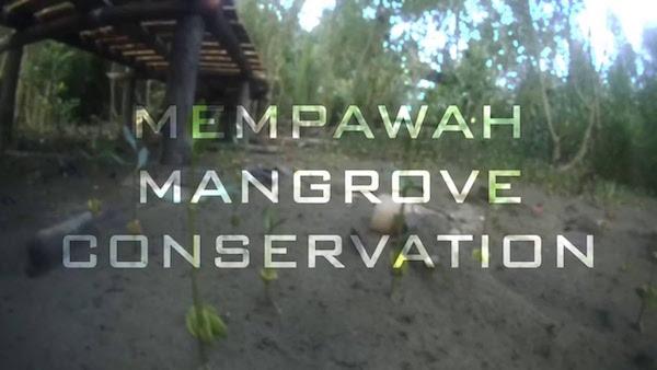 Mempawah Mangrove Park, Menikmati Keindahan Taman Bakau di Pesisir Pantai