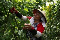 Petani Kecil Indonesia