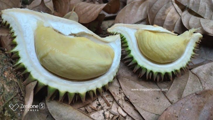 Durian Rasa Terbaik yang Dicicipi Blogger Borneo
