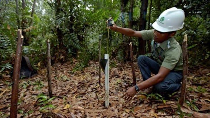 Dampak Industri Kehutanan bagi Perkembangan Indonesia di Mata Sukanto Tanoto