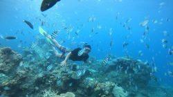 7 Spot Wisata Pulau di Paket Tour Karimun Jawa